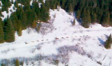Aerial view of Dog Sled race