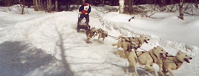 Dog sled racing in Jackman Maine